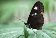Free Butterfly Stock Images - 15877234
