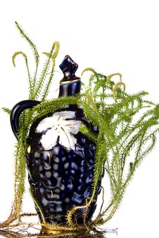 Free Old Decanter With Lycopodium Stock Images - 15877604