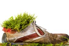 Free Shoe With Moss Stock Images - 15877614