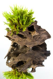 Free Moss On A Stump With Reflection Stock Photos - 15877633