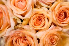 Free Yellow Roses Stock Photo - 15878020