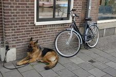 Free Dog And Bike. Stock Image - 15878511