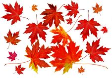 Free Autumn Leaves Stock Photography - 15878572