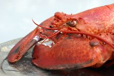 Free Cooked Lobster Royalty Free Stock Photo - 15878845