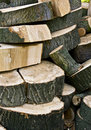 Free Logs Stock Photography - 15884822