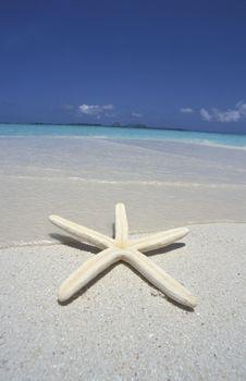 Free Starfish Stock Images - 15880764