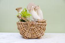 Free Mushroom Stock Photo - 15881740