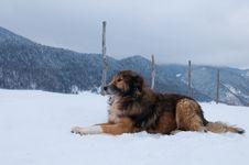 Sheepdog, Shepherd Dog In Winter Stock Photo