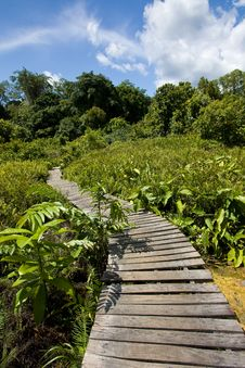 Free Jungle Trail Stock Photo - 15883220