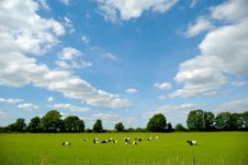 Free Green Field With Goats Royalty Free Stock Photos - 15883278