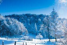 Free Fir Covered With Snow Against Light Stock Photos - 15883303
