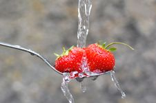 Free Strawberry Stock Photos - 15884413