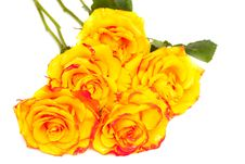 Free Yellow Roses Isolated Stock Images - 15886434