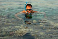 Free Snorkeling Royalty Free Stock Photo - 15886575