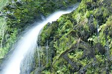 Free Grey Mares Tail Royalty Free Stock Image - 15887436