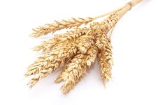 Free Wheat Ears Royalty Free Stock Image - 15888286