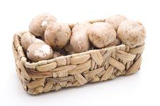 Champignon Mushrooms Stock Images