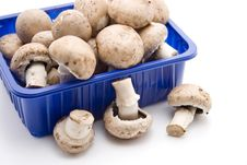 Free Champignon Mushrooms Royalty Free Stock Photography - 15888497