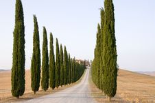 Free Trees Row Stock Photography - 15888622