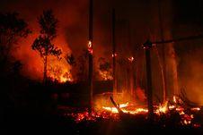 Free Bario Bush Fire Casualty 3 Royalty Free Stock Photo - 158847585