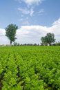 Free Planting Vegetables Royalty Free Stock Photos - 15897028