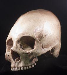 Free Human Skull Royalty Free Stock Photo - 15890695
