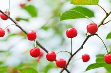 Free Cherry Stock Photo - 15890940