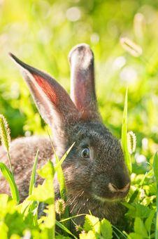 Free Rabbit Royalty Free Stock Images - 15891369