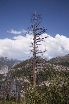 Free Yosemite Royalty Free Stock Images - 15891669