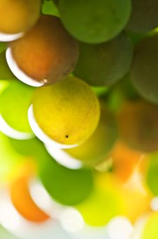 Free Grape Stock Photography - 15891712