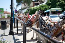 Free Donkeys In Mijas (Andalusia, Spain) Royalty Free Stock Photo - 15892085