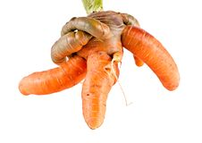 Free Mutatnt Carrot Stock Images - 15892454