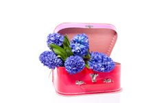 Free A Bouquet Of Blue Hyacinths Stock Image - 15893411