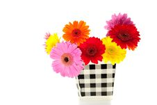 Free Colorful Mixed Gerber Daisies Royalty Free Stock Photography - 15893487