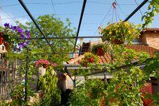 Garden Royalty Free Stock Photo