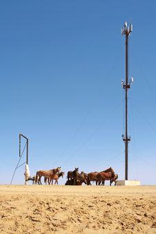 Free Horses. Royalty Free Stock Photos - 15894958