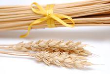 Free Wheatgrass Royalty Free Stock Photos - 15895028