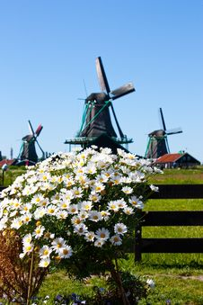 Free Flowers In Holland Stock Photos - 15895703