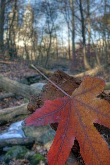 Free Autumn Leaves Royalty Free Stock Photo - 15897635