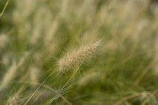 Free Meadow Grass Royalty Free Stock Images - 15897989