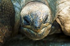Free Turtle Stock Images - 15898944