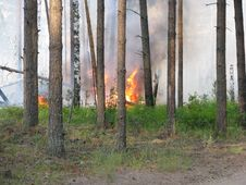 Free Wildfire Royalty Free Stock Photography - 15899817