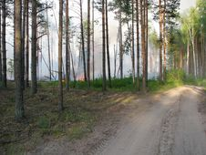 Free Wildfire Royalty Free Stock Images - 15899939