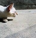 Free Alert Cat Stock Photo - 1590280