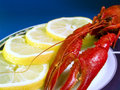 Free Red Lobster Stock Photos - 1595373