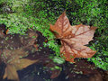Free Autumn II. Stock Photo - 1596400