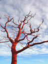 Free Red Tree Stock Photo - 1596450