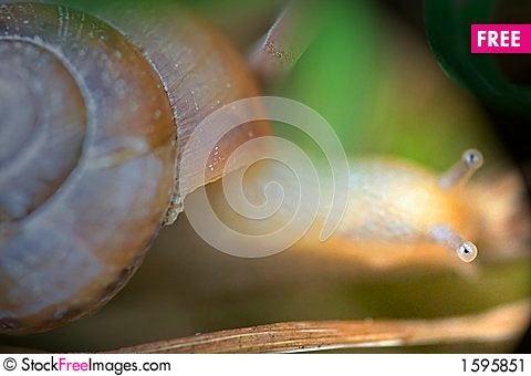 Free Snail Stock Image - 1595851