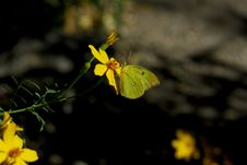 Free Yellow On Yellow Stock Images - 1590314