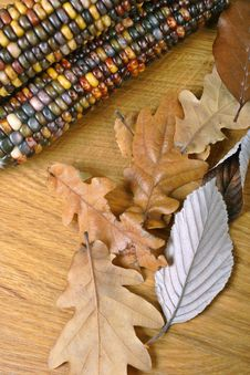 Free Indian Corn And Fall Leaves Stock Images - 1591934